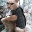 Il gatto Fluffo in posa col suo maglione